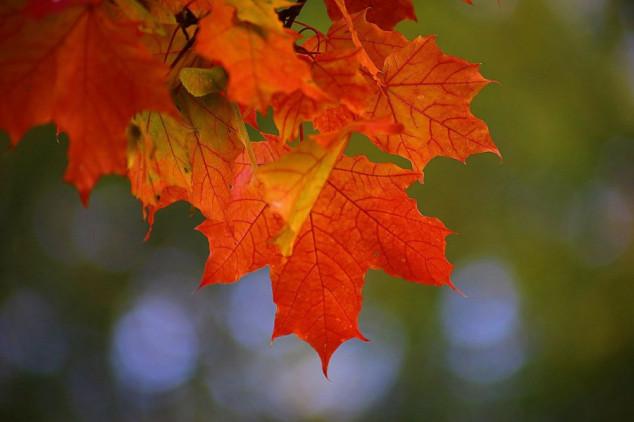 Šta se događa sa šumom u jesen?