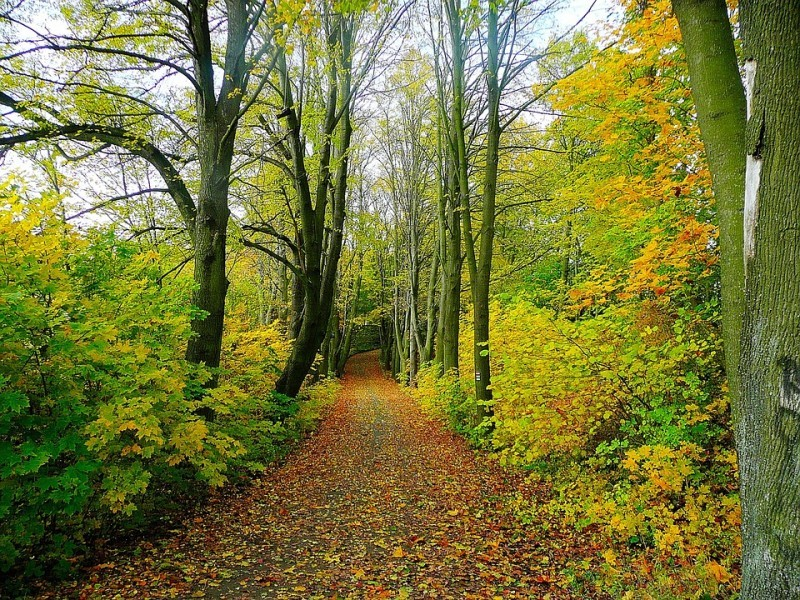 Održavanje šumske infrastrukture u privatnim šumama