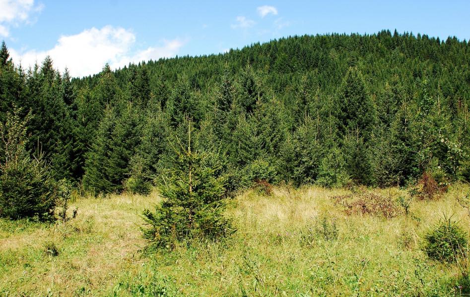 Danas je Svjetski dan šuma - Hrvatska ih čuva
