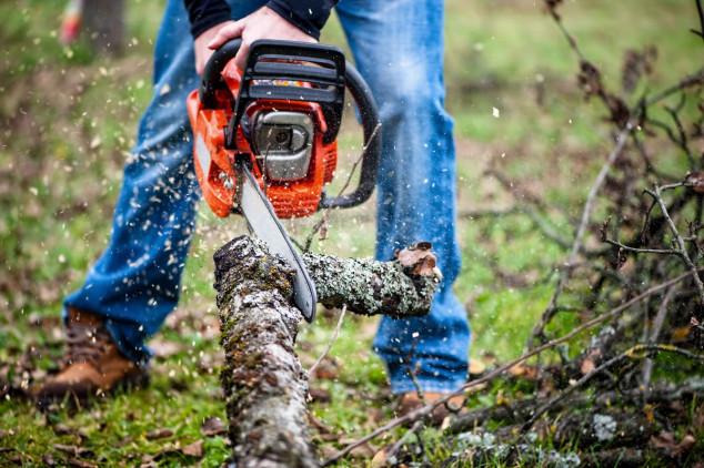Poljskim šumarima četvrtina godišnjeg prihoda