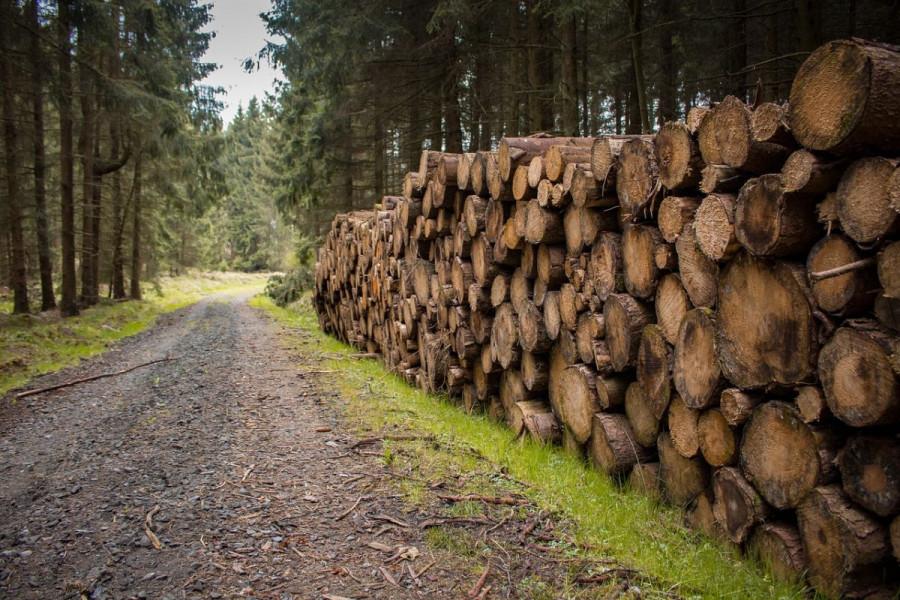 Smanjila se količina posječenog drveta za 0,3%