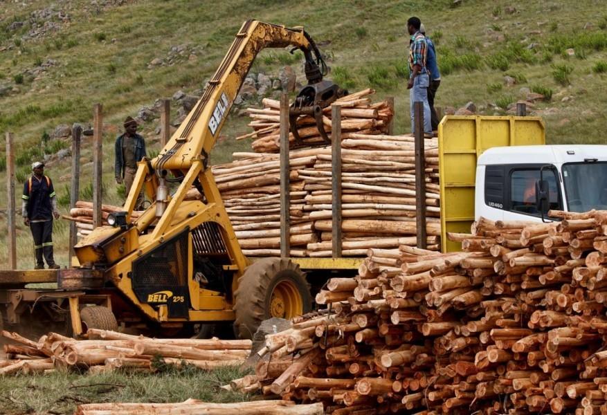 Povećana drvna proizvodnja u 2015. godini