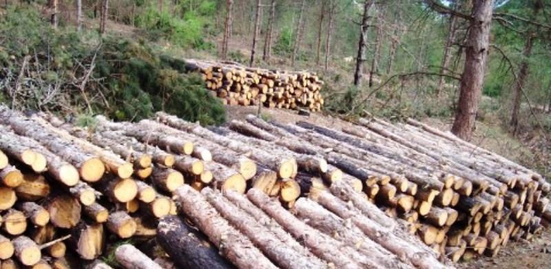 Šestorka prijavljena za šumske krađe u Omarskoj