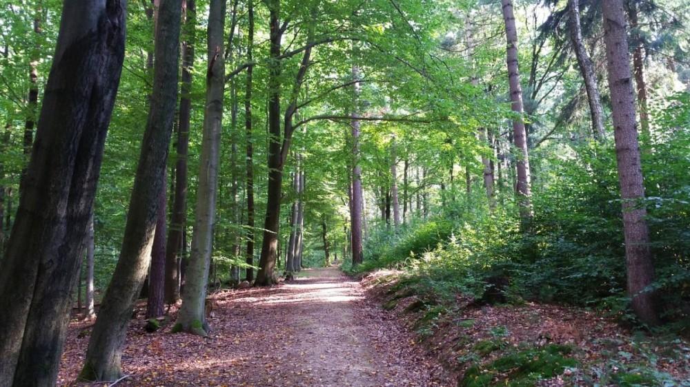 Potpore za marketing u šumarskom sektoru!