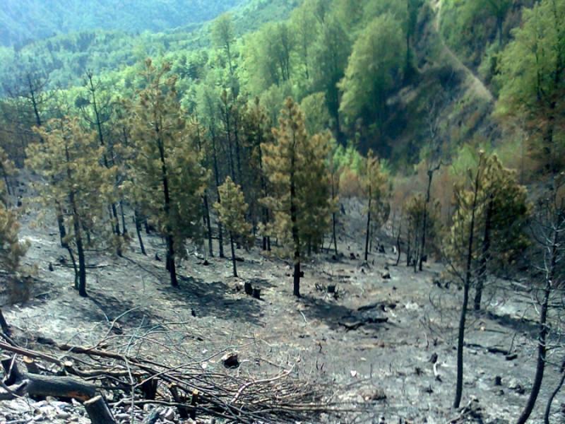 ZDK donio mjere sprečavanja bespravne sječe šuma