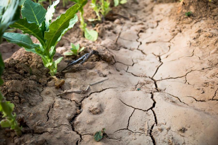 Isplatama predujma do saniranja šteta od suše