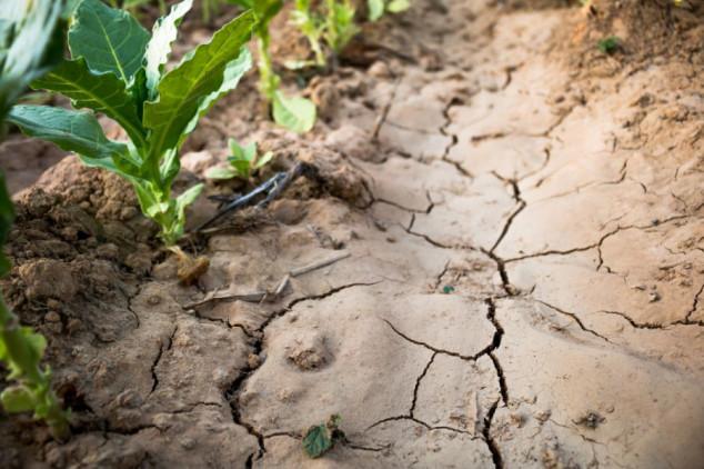 Isplatama avansa do saniranja šteta od suše