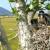 Vojvodini nedostaje 170.000 hektara novih šuma