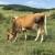Do kraja godine novi program i posebna mjera za razvoj pašnjačkog stočarstva na kršu