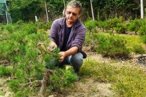 Bon znači posuda, sai drvo, a kako uspješno uzgojiti bonsai?