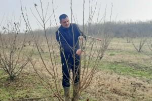 Tomislav Pustički: Za lijesku je potrebno znanje, strpljenje i puno volje, ali isplati se