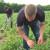 Mladi u Pocerini uspešno gaje i prerađuju lekovito bilje