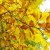 Mala enciklopedija šumarstva: Zašto stabla odbacuju lišće i iglice?