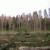 Suzbijanje osmerozubog smrekovog potkornjaka u Gorskom kotaru