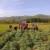 Proizvodnja artičoke u podnožju Suve planine