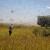 Planiraju proizvoditi đubrivo od skakavaca - stanovnici zarađuju skupljajući ih