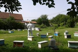 Ekonomistkinja u pčelarstvu koja se ne osvrće na zakone tržišta