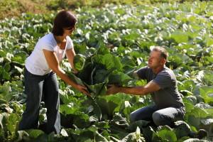 Eko Klanac: Očuvali djedovinu i uspješno spojili eko poljoprivredu i turizam