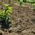 LAG Sava raspisao natječaj za male poljoprivrednike vrijedan gotovo 2 milijuna kuna