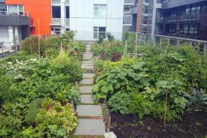 Neiskorišćeni gradski prostori - bašte i voćnjaci za prehranu stanovništvo