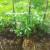 Mala bašta u slami – jednostavan uzgoj povrća i na lošijim zemljištima