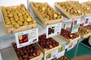Krompir po 9 evrocenti ruši matematiku