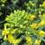 Toplo vreme povoljno utiče na razvoj insekata - štete na uljanoj repici