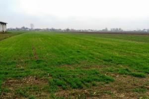 Novembarska setva pšenice u Podrinju