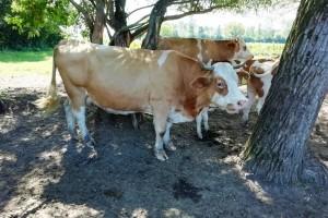 Na Silvestrovo odlazi posljednja cisterna s nekad uzornog mliječnog gospodarstva