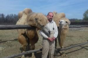 Đurđevačke deve na godinu u Podravinu privuku više od 10 tisuća gostiju