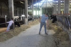 Najveći koprivničko - križevački proizvođač mlijeka na mukama zbog državne zemlje