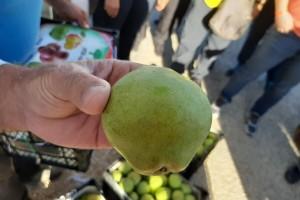 Citronka: Stara sorta kruške omiljena je u Turskoj