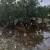 Kiša i orkanski vjetar poharali dolinu Neretve, traži se proglašenje elementarne nepogode