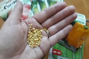 Koliko semena mogu da traju i kako proveriti klijavost?
