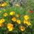 Volonterske biljke: Čuvaju zdravlje povrća i estetski obogaćuju vrt
