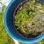 Štitite povrće listovima paradajza, crvenim, belim lukom i korovskim vrstama