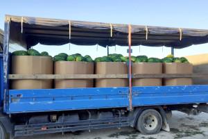 """""""Akcijanje"""" s lubenicama u trgovinama uništava domaće uzgajivače: Udruga traži dizanje cijena"""