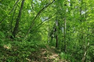 Nova Strategija za šume naišla na brojne kritike europarlamentaraca