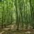 DZS: Smanjena količina ukupno posječenog drva za tri posto u 2020. godini