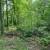 Izmjene Pravilnika o uređivanju šuma u javnom savjetovanju
