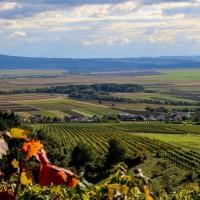 Agro party u Venju: Bogata zabava uz korisna predavanja o ulaganjima u poljoprivredu