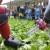 Na poljima nema radnika - tko će spašavati buduće berbe voća i povrća?