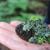 Mala enciklopedija šumarstva: Lišaji i njihovo značenje