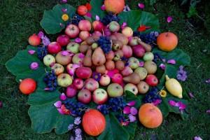 Dani cerničkog portugisca uz izložbu plodova starih sorti