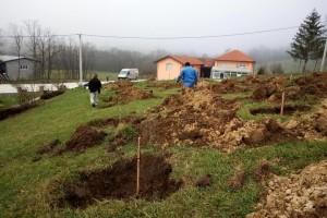 Podizanje plantaže kestena i uvjeti za uspješan uzgoj u BiH