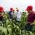 BASF Dani polja: predstavljanje tehnologije zaštite uljarica i žitarica