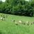 Enes Ibrahimagić: Čude se našim proizvodima jer se ne osjeti miris koze