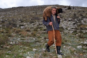Ovčar Zore Gužvica među stijenama pronašao naklano janje othranjeno na dudicu!