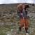 Ovčar Zore Gužvica među stijenama pronašao naklano janje koje je othranio na dudicu!