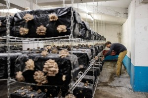 Podzemna parkirališta: Dileri i narkomani morali ustupiti mjesto gljivama i endiviji